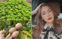 Bà bầu Quế Vân khoe vườn rau sạch nhà trồng nhìn là mê