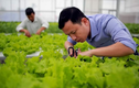 7x thu hàng tỷ đồng mỗi năm nhờ trồng rau