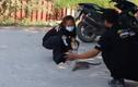Video: Người dân được hướng dẫn bắt rắn hổ mang chúa