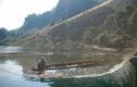 Bắt thủy quái Sông Đà nặng hơn 50 kg