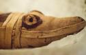 Xác cá sấu cụt đầu bí ẩn trong ngôi mộ cổ 3.400 năm tuổi