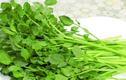Công dụng chữa bệnh tuyệt vời của rau cải xoong bạn biết chưa