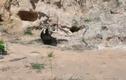 Video: Vồ trượt gà con, đại bàng bị gà mái mẹ đánh tan tác