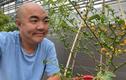 Diễn viên Quốc Thuận sở hữu cây ớt hạt tiêu đắt nhất thế giới