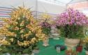 Hoa lan Trung Quốc đắt đỏ ngang ngửa lan Đà Lạt