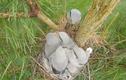 Video: Chim sơn ca ghim chuột chết lên cây, xẻ thịt ăn dần