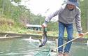 Cá tầm Trung Quốc quá nhiều, hạ đo ván cá trong nước