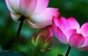 Phật giáo chỉ ra 4 kiểu người phúc mỏng mệnh khổ