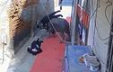 """Video: Chạy khỏi lò mổ, trâu """"điên"""" húc 2 người văng lên không trung"""