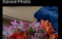 Những cách đơn giản để ẩn và khóa ảnh/video riêng tư trên iPhone