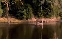 Video: Chó hoang tung chiêu săn mồi kỳ lạ