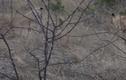 Video: Đối đầu cặp sư tử, mèo hoang liều mình vẫn chết thảm