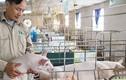 Bỏ nhà nước về nuôi lợn, mỗi năm thu hơn 1 triệu USD