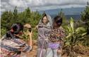 Bộ tộc sống chung với người chết trên đảo Sulawesi ở Indonesia