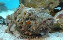 Đặc sản cá mặt quỷ ở Nha Trang về Hà Nội giá 2-3 triệu đồng/kg