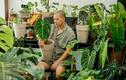 Chàng trai Sài Gòn chi 300 triệu mua kiểng lá đột biến để trang trí nhà