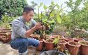 Bỏ 250.000 đồng mua cây này về trồng, sau 5 năm thu về trăm triệu/năm