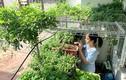 Vườn 3m2 ở ban công đủ các loại rau của nam kỹ sư Sài Gòn