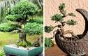 7 loại cây cảnh dễ gây nguy hiểm, không nên trồng trong nhà