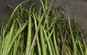 Xưa dùng để chống đói, nay trồng loại rau này kiếm tiền triệu mỗi ngày
