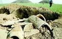 Người nông dân cả gan bán bảo vật đào được trong lăng mộ hoàng đế