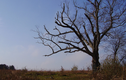 """Kỳ bí """"cây của quỷ"""" hơn 200 tuổi"""