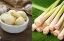 13 thực phẩm là kháng sinh tự nhiên chống lại vi khuẩn