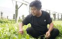 9x trồng thứ cây mọc dại ở Việt Nam mà đút túi hơn 21 tỷ