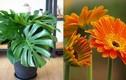 6 loại cây phong thủy trồng trong nhà hút sạch chất độc hại
