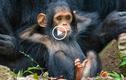 """Video: Những khoảnh khắc """"tấu hài"""" dễ thương của các loài động vật"""