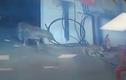 Video: Mải quyết chiến với báo hoa, chó mẹ bị bắt mất đàn con