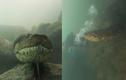 Cảm giác đang bơi mà gặp phải một con trăn Anaconda thì sẽ ra sao?