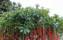 6 loại cây trồng trước cửa nhà tăng lộc khí giàu có, con cái hiếu thuận