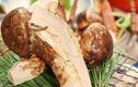 Nhà giàu săn nấm ăn chay có mức giá mà nhà nghèo không dám nghĩ đến