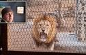 Video: Sư tử gầm thét dọa chủ nhà qua cửa sổ nhà bếp