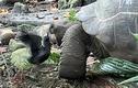 Video: Rùa tấn công đoạt mạng chim nhạn trong chớp mắt