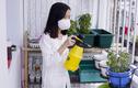 Tự làm vườn bằng đồ dùng tái chế trong giãn cách