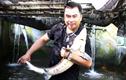 Cá lạ nuôi dưới chân núi Voi Đầm là loài cá gì mà con to bự