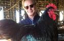 Giống gà thuần chủng siêu to khổng lồ nhất thế giới