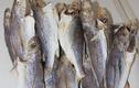 Việt Nam có loại cá từng thất sủng, nay là đặc sản giá đắt