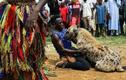 Nghề nuôi linh cẩu phục vụ giải trí và làm thuốc ở Nigeria