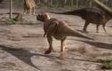 """Video: """"Sát thủ"""" kỷ Phấn Trắng bỏ mạng khi săn khủng long"""