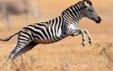 Chiêm ngưỡng vẻ đẹp độc đáo của động vật hoang dã ở châu Phi