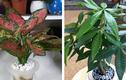 5 loại cây hút lộc, trồng trong nhà thì việc làm ăn phất như diều