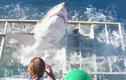 Video: Thót tim khi cá mập lao qua lồng có thợ lặn ở bên trong