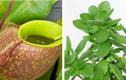 10 loại cây phong thủy có sức mạnh hóa giải vận xui