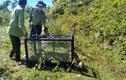 Video: Trăn gấm quý hiếm được thả về rừng an toàn