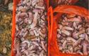 Loại nấm có vị đắng ngắt nhưng lại là đặc sản giúp người dân hốt bạc
