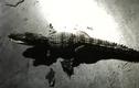 Video: Người dân bắt được cá sấu khi đang câu cá