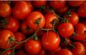 Loại cà chua chỉnh sửa gene giúp giảm căng thẳng và sợ hãi?